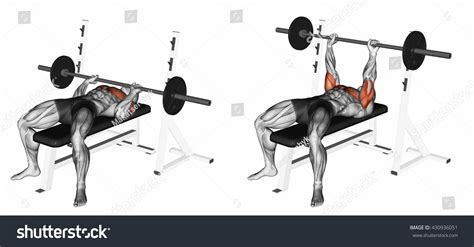 exrx close grip bench closegrip barbell bench press 3d illustration stock