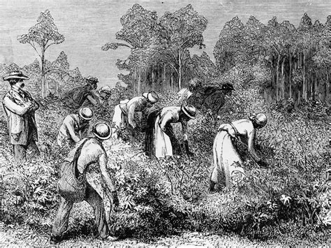 enslaved the new british slavery how women s key role in abolition has yet to receive the attention it deserves the