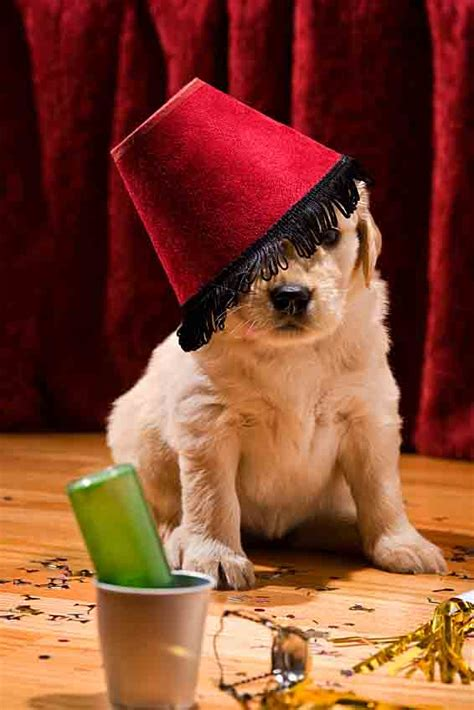 unusual names  dogs  alcoholic drinks