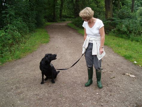 when do puppies walk cath s pet care and house sitting walking liverpool pet care liverpool