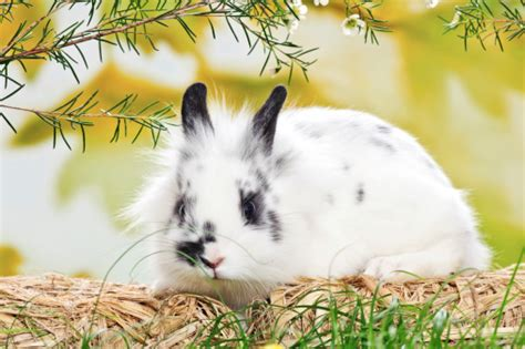 alimentazione per conigli alimentazione roditori tutto ze