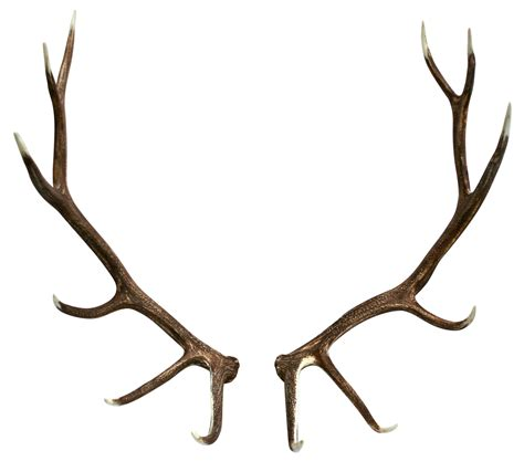 Moose Shedding Antlers by Elk Shed Antler Pair Jag Antlers