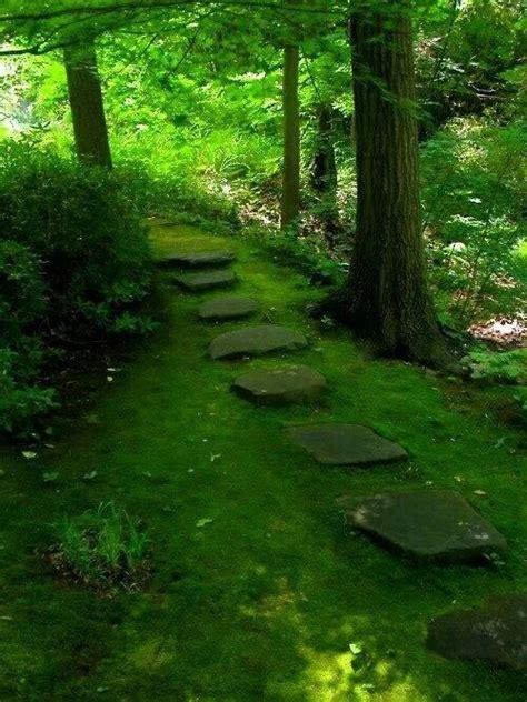 moss garden path moss gardens pinterest