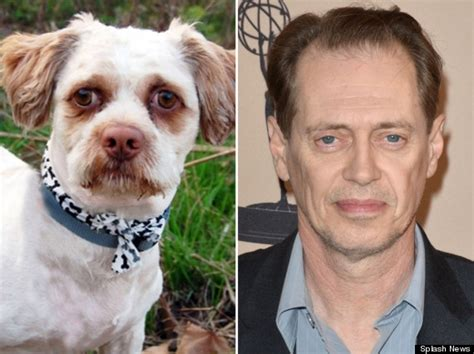 dogs that look like humans hounds who look like humans part ii steve buscemi and