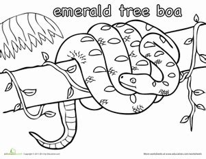 emerald tree boa worksheet education com
