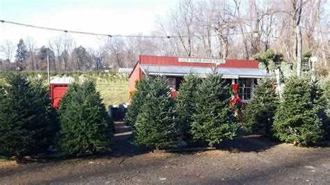 christmas tree farm guide new york new jersey