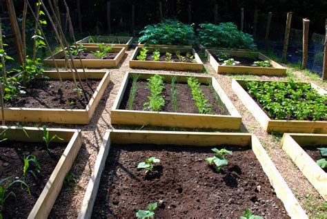 Progress In The Raised Bed Vegetable Garden The Modern How To Grow A Raised Bed Vegetable Garden