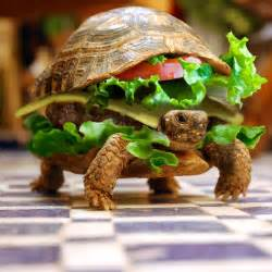 Funny turtle wallpaper desktop unique animal wallpapers