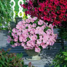 Garten Terrasse Ideen 4247 by Stiefm 252 Tterchen Bringen Euch Den Fr 252 Hling Auf Balkon Und