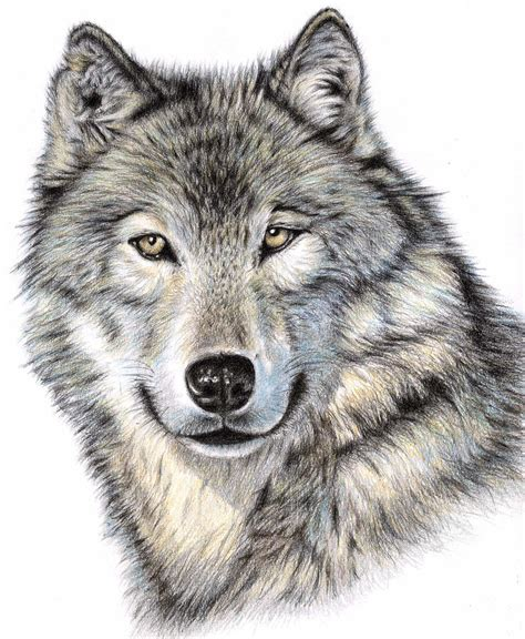 wolves drawings the wolf drawing by zeug