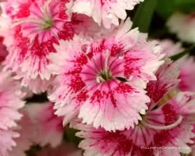 images of flowers lovely flowers wallpaper 247744 fanpop