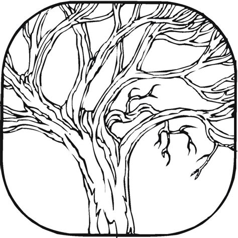 deciduous tree coloring page deciduous trees coloring pages