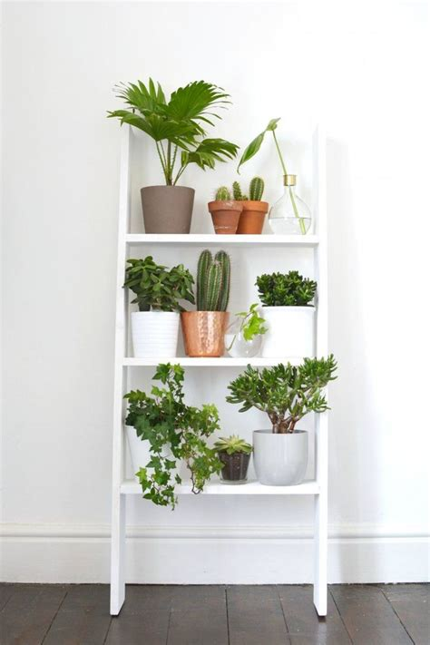 Plant Home Decor by Best 25 Plant Decor Ideas On House Plants