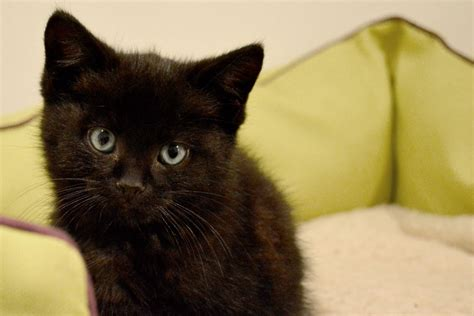cat and pictures lots of cats and kittens available newcastle upon tyne tyne and wear pets4homes