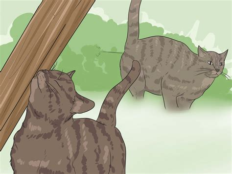 how to a to use a litter box how to retrain cat to use litter box how to retrain a cat use the litter box contops
