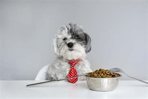vet recommended food best food for poodles 9 vet recommended brands couture country
