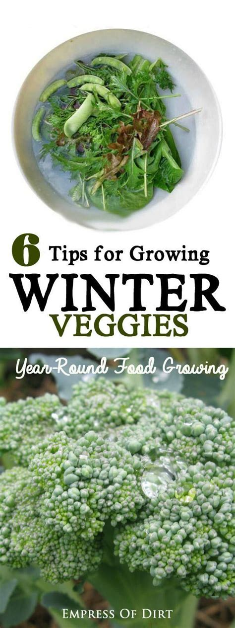 25 best ideas about fall vegetable gardening on