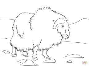 The Gallery For Gt Musk Ox Coloring Page Ox Coloring Page