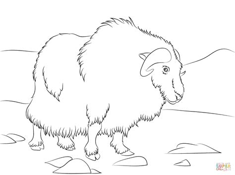musk ox coloring pages