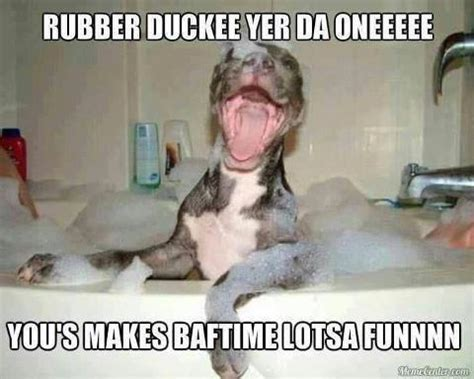 Bath Meme - funny dog in the bath picture jokes memes pictures