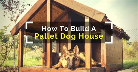 how to create a house how to build a pallet dog house in a perfect manner