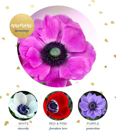 anemone flower meaning anemone meaning and symbolism ftd