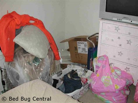 bed bug central bed bugs infestations and sanitation bed bug central