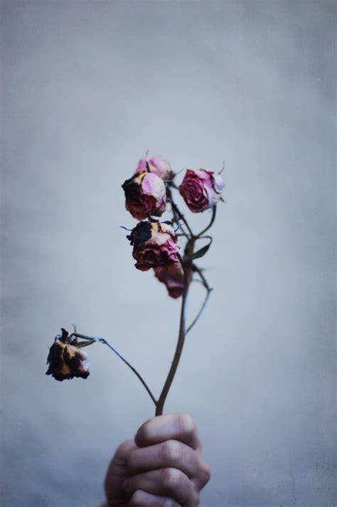 imagenes de rosas marchitas flores marchitas tumblr