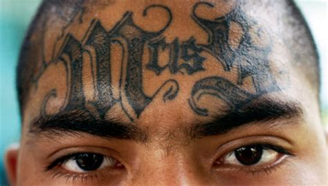 ms 13 gang tattoos ms 13 tattoos free design