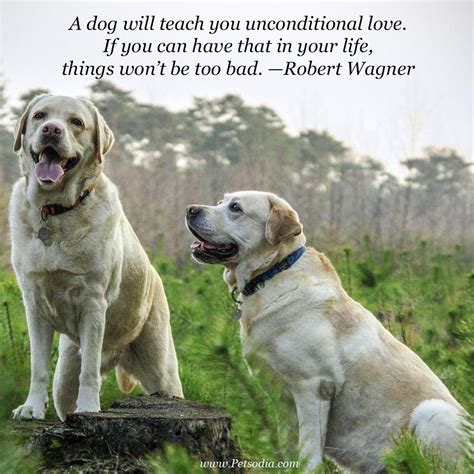images of love dogs quotes that will make you love your dog even more