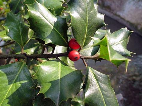 piante invernali da giardino piante invernali da esterno piante da giardino fiori