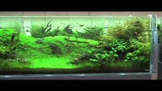 Aquascaping Ideas For Planted Tank Adg In Japan 2010 Nature Aquarium Party Youtube