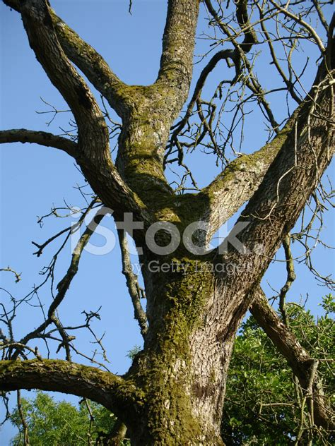 what is a tree trunk covered with 4 letters lichen covered tree trunk stock photos freeimages