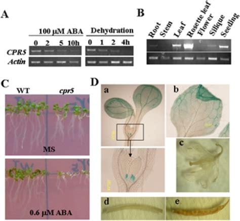 pattern analysis aba pone 0019406 g001 arabidopsis cpr5 independently regulates