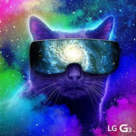 cool cat backgrounds cool cat backgrounds wallpapersafari