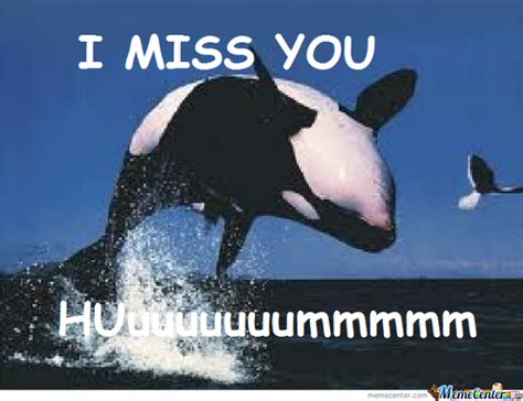 Whaling Meme - i miss you whale by shak112 meme center
