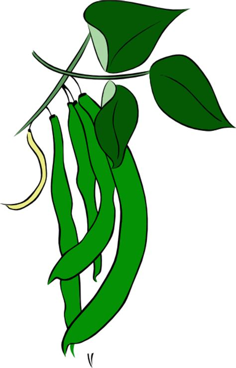 String Beans Clip - green beans clip at clker vector clip