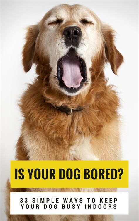 is my bored 33 simple ways to keep your busy indoors puppy leaks