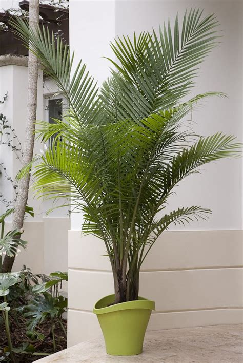 palm tastic patios images  pinterest