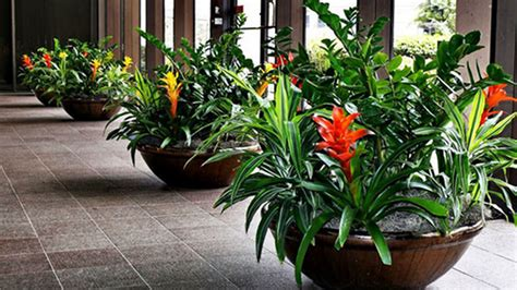 bromeliads   home saturday magazine  guardian