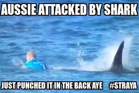 Shark Attack Meme - aussie attacked by shark mick fanning shark attack