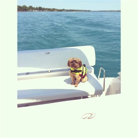 regal boats instagram the raby s puppy looking fabulous on their new regal 2860