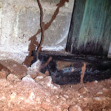 gets eaten out by treated timber getting eaten out the termite trackers termite inspections