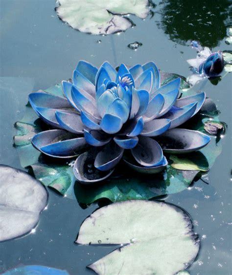 testo lotus flower 25 beautiful blue lotus flower ideas on lotus