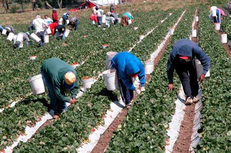 imagenes de trabajadores temporales inicia programa de trabajadores agr 237 colas temporales