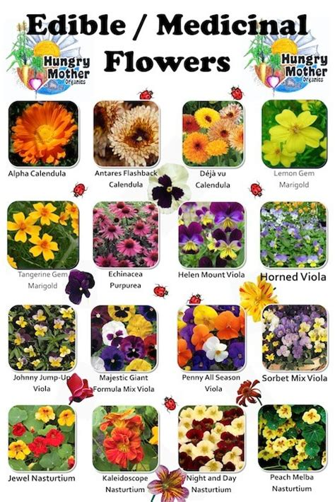 list of flowers edible wild plants chart www imgkid com the image kid
