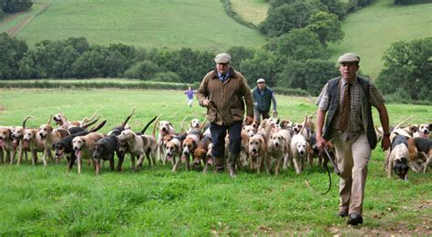 how to a hound to hunt country and field sports shooting falconry ferreting