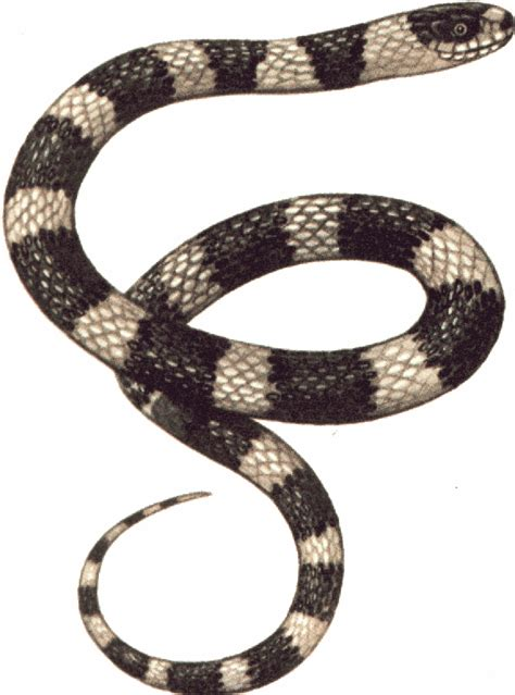 clipart snake snakes clip free clipart panda free clipart images