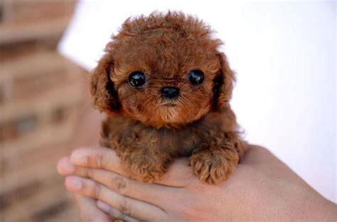imagenes animales bebes 25 fotos de animales bebes que te haran morir de ternura