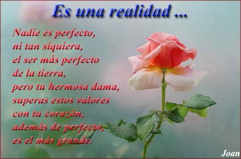 imagenes rosas con frases hermosa rosa con frases de amor imagenes de rosas